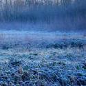 3474-frozen meadow