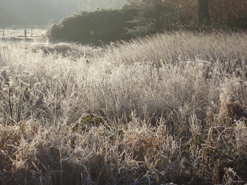 a meadow of tall grasses covered in frost with contre-jour lighting