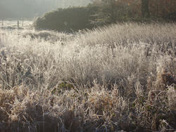 3475-frozen meadow grasses