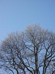 3476-frozen tree