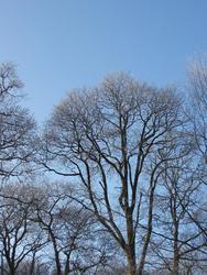 3477-frozen trees