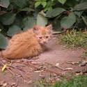 3226-sad kitten