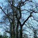 3854-gnarled_trees.JPG