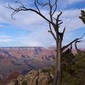 3177-grand canyon dead tree