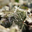 3482-ice crystals