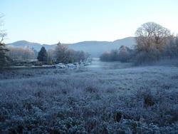 3494-frosty meadow