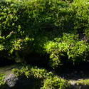 3857-moss_green_background.jpg