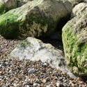 3892-rocks_on_the_beach.JPG