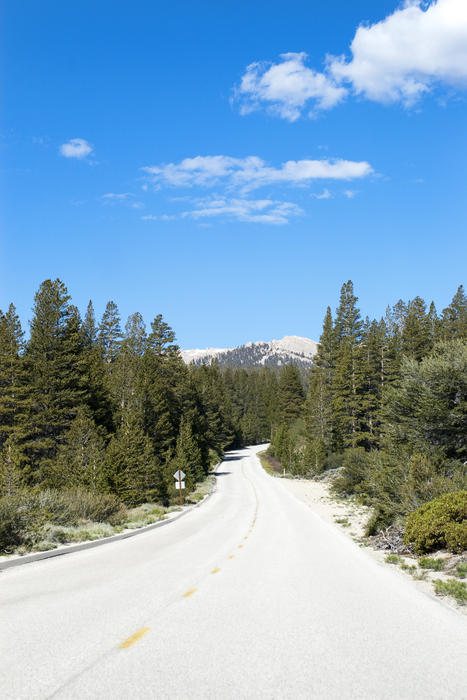 3081-sequoia national park drive