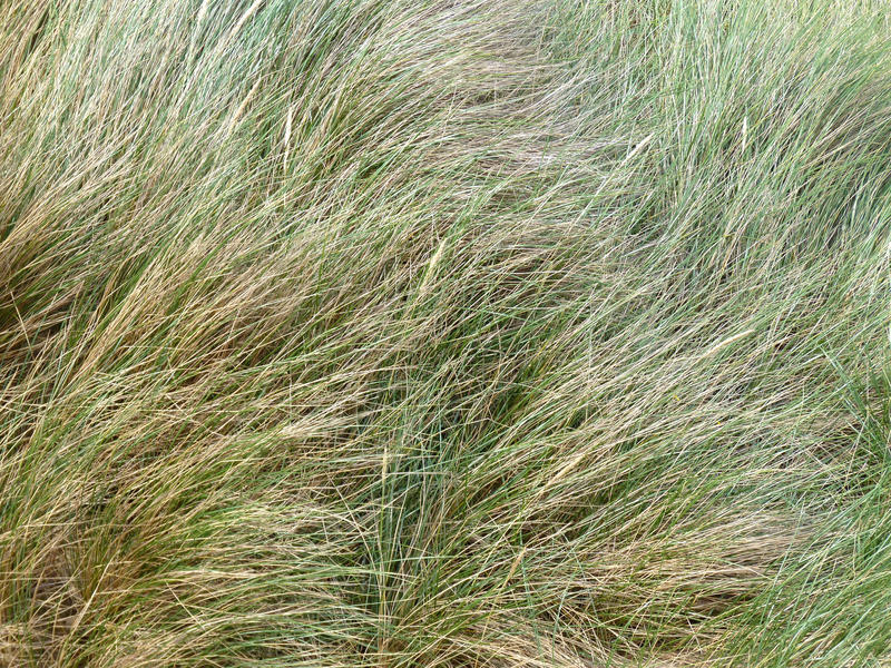 <p>Soft grassy green texture</p>