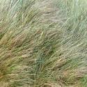 4321   soft grass texture