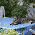3238-tabby on the table
