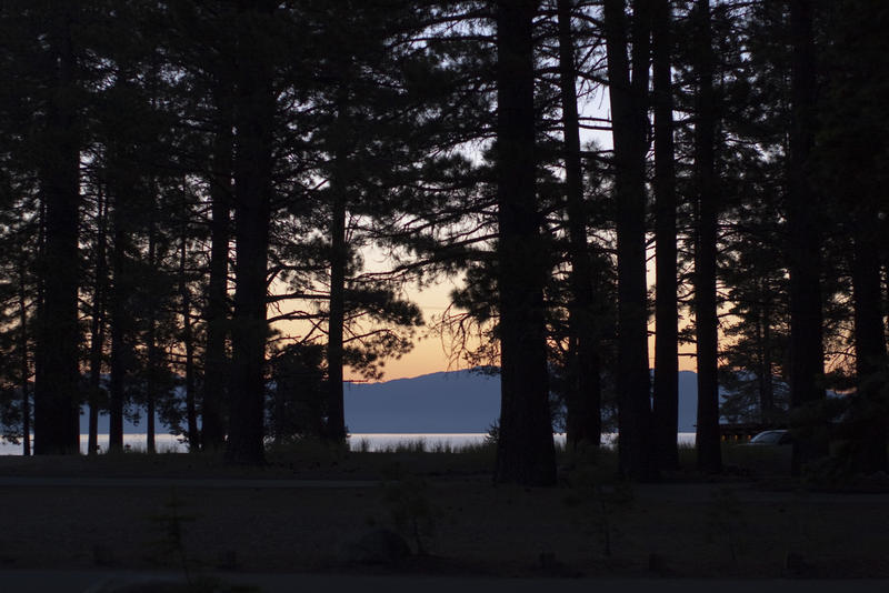 3091-Tahoe Sunset treeline