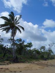 4115-beach trees