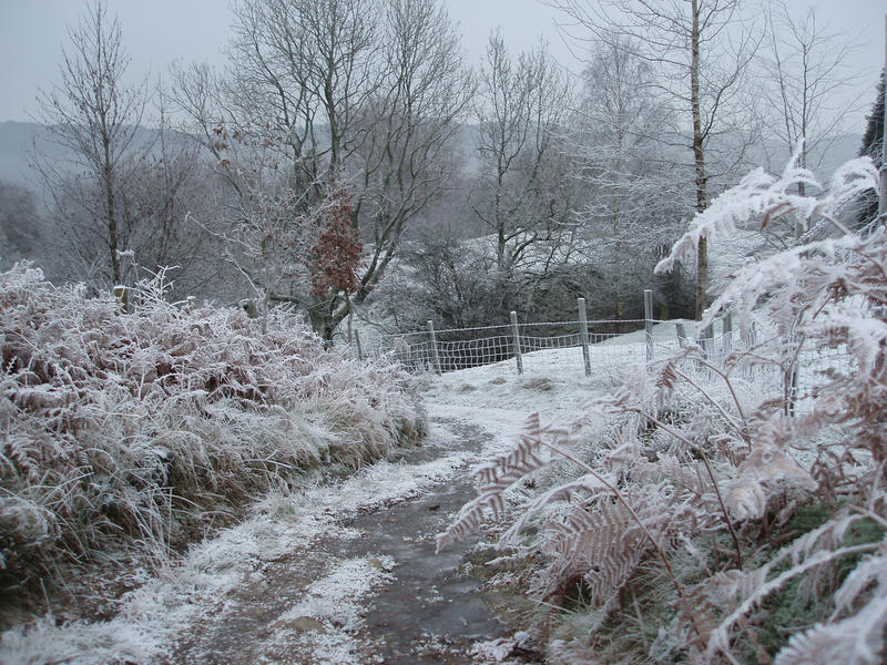 a bridalpath with all around covered in frost