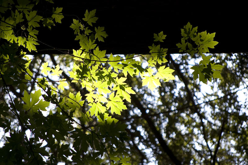 dappled sunlight streaming through leaves on a tree