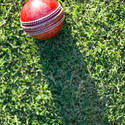 4835   cricket ball on grass