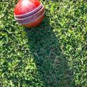 4835   cricket ball on grass