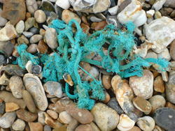 4594   beach rubbish