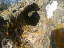 4487   blackhole lichen
