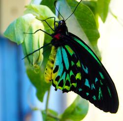 4544   butterfly 7