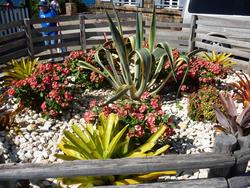 4892   cactus garden