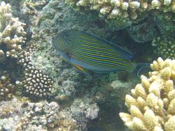 4473   coral fish