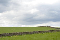 5050   Green Agricultural Fields