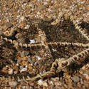 4662   crab net beached