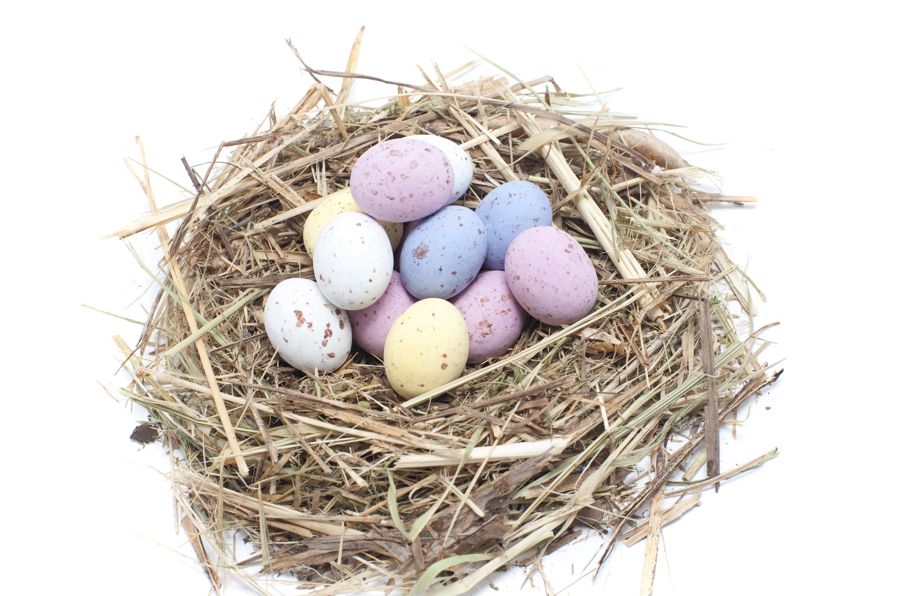 Free Stock Photo 5062 Easter Egg Nest | freeimageslive