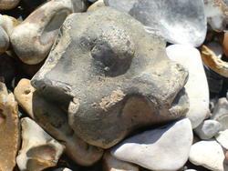 4583   fish face pebble