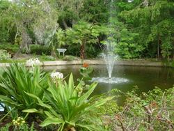 4816   tropical gardens