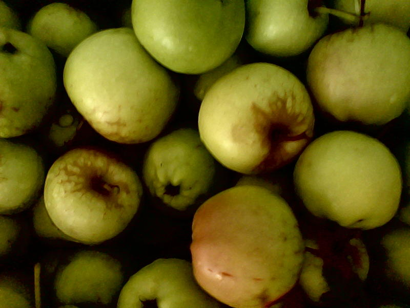 <p>green apples with a painted effect</p>