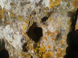 4480   lichen rock