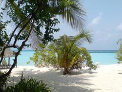 4428   maldives beach