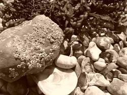 4580   pebbles black and white