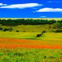 4659   poppy fields sussex downs