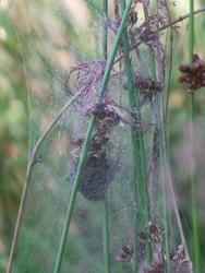 4963   spider web1
