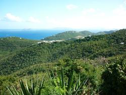 4928   tropical vista