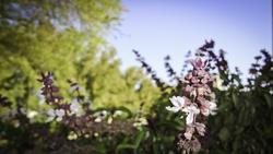 5042   summer flowers