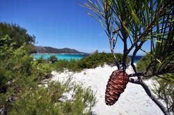 4648   Pine cone, Desert des Agriates, Corsica