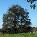 4635   tree in a hampshire field