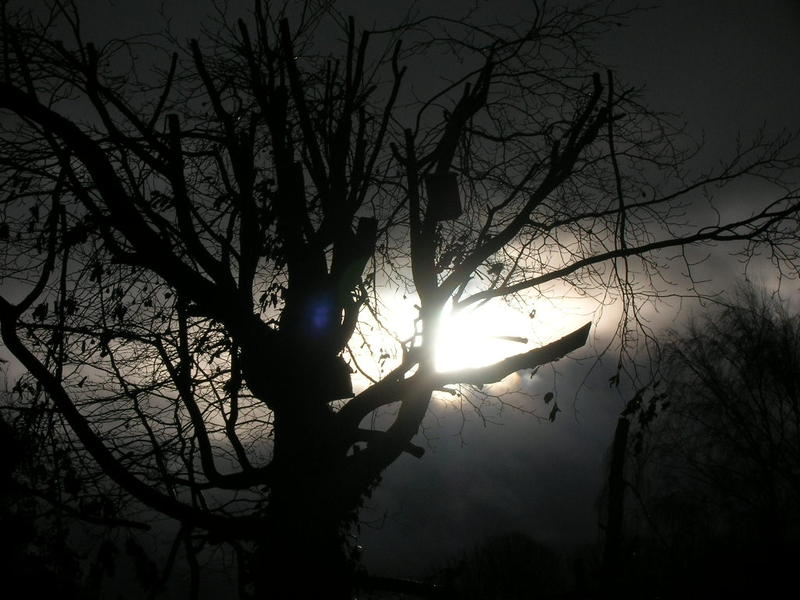 <p>moonlight through tree branches</p>