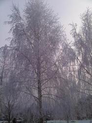 4433   winter snow trees