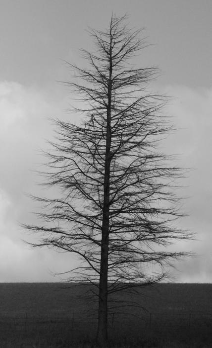 4651   winter tree