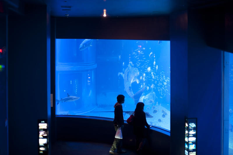 People viewing an underwater aquarium exhibit through a large window as they marvel at the biodiversity of marine life