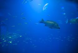 7394   fish background