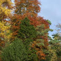 5159   Colourful Autumn Trees