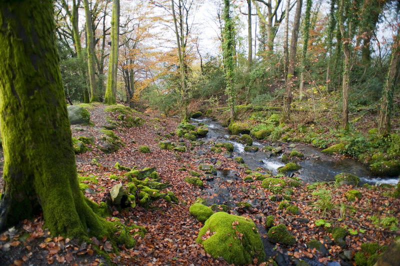 Mossy green rocks and tree trunks alongside a picturesque stream in an autumn or fall forest