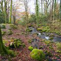 5160   Forest Stream In Fall